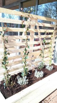 Plantenbak met klimrek